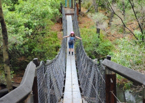 yabba creek circuit - suspension bridge at far end