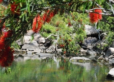 bottlebrush pool — why do you think they named it that?